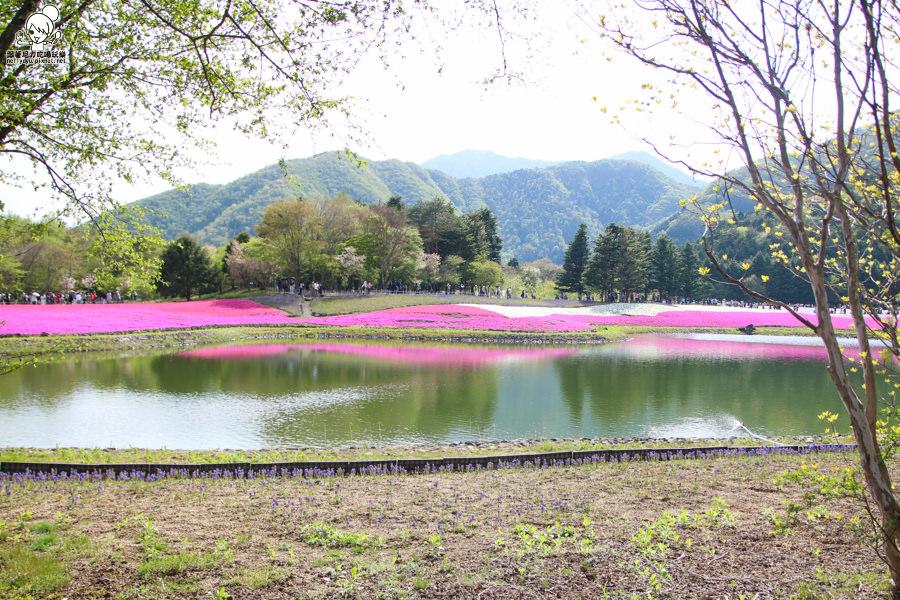 富士芝櫻祭 日本旅遊 日本必遊 推薦富士芝櫻-1110.jpg