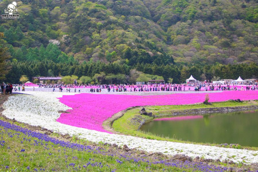 富士芝櫻祭 日本旅遊 日本必遊 推薦富士芝櫻-1156.jpg