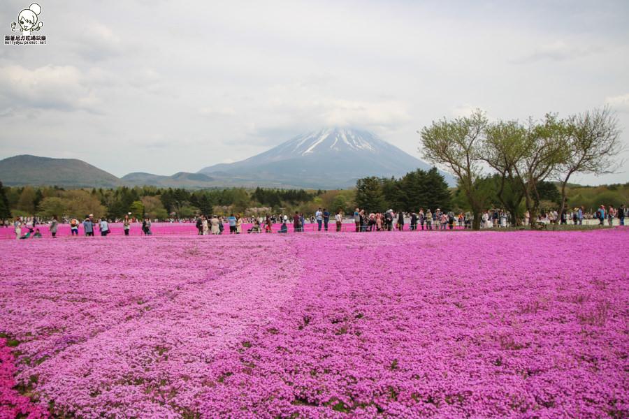富士芝櫻祭 日本旅遊 日本必遊 推薦富士芝櫻-1206.jpg
