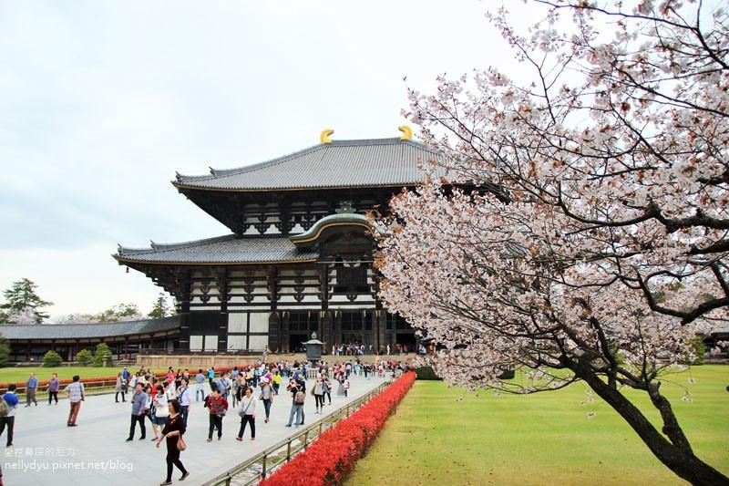 東大寺、奈良公園28.JPG