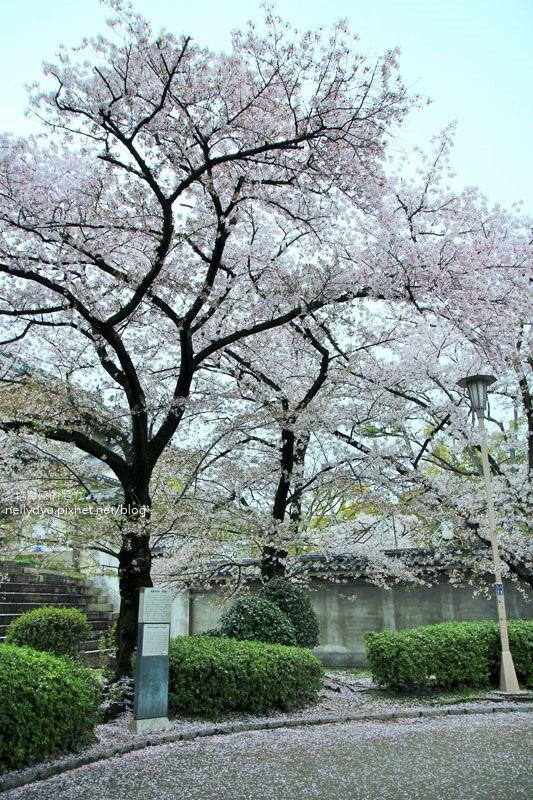 日本賞櫻-大阪城公園11.JPG