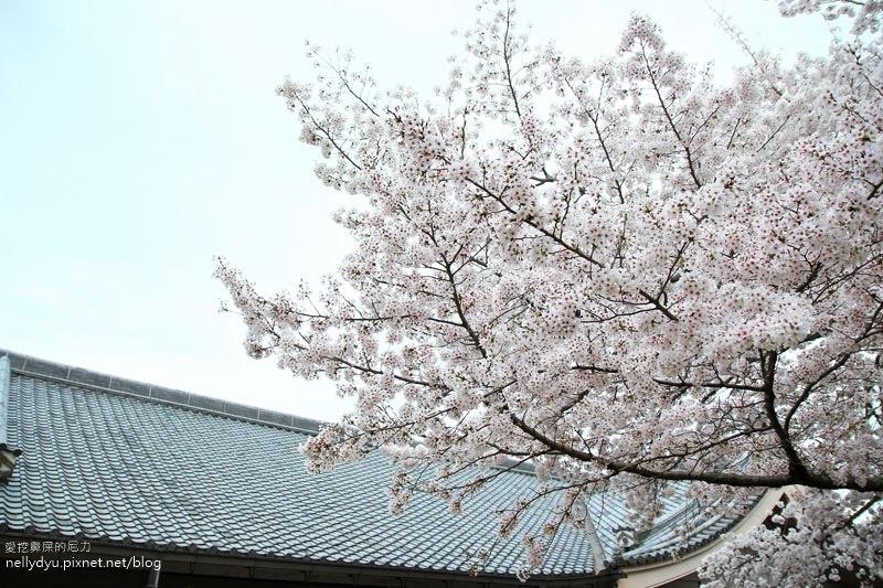 東大寺、奈良公園31.JPG