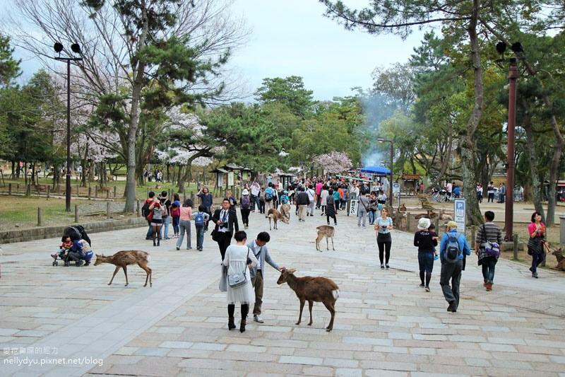 東大寺、奈良公園18.JPG