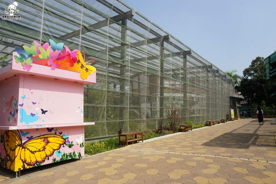 高雄旅遊 蝴蝶園 金獅湖 高雄景點 免費參觀 高雄好玩 親子出遊