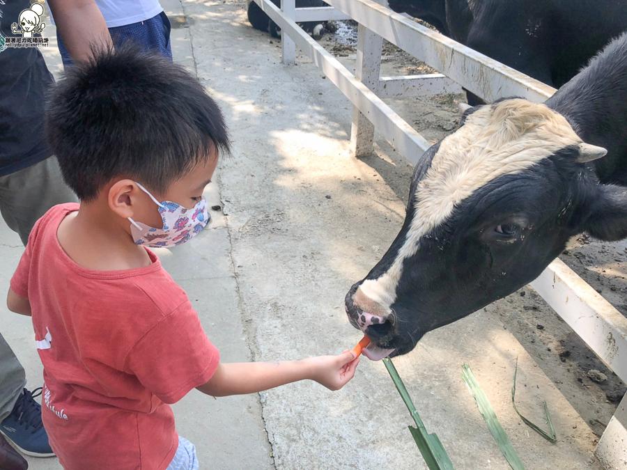 農場 樹谷 好玩 親子 互動 台南景點 台南旅遊 親子旅遊