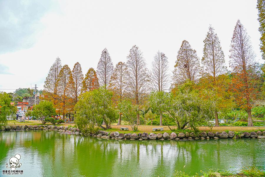 新竹景點 落羽松 新竹旅遊 景點 夯點 六塘