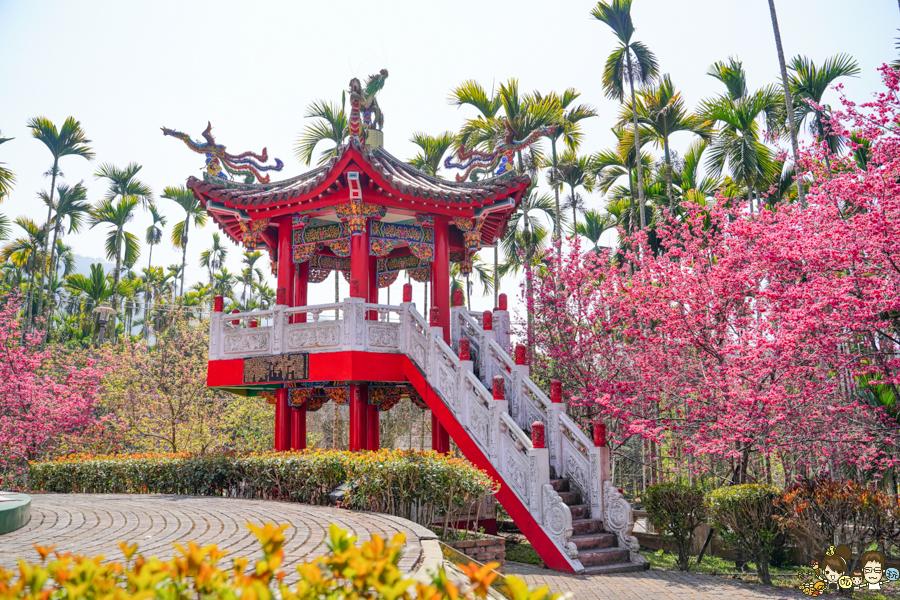 日月潭 賞櫻 櫻花 三太子 南投景點 好拍 好玩 免費 旅遊